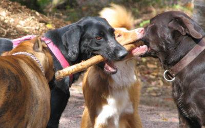 Recomendaciones para que nuestras mascotas tengan una boca sana.