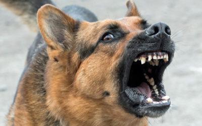 Recomendaciones para evitar casos de rabia
