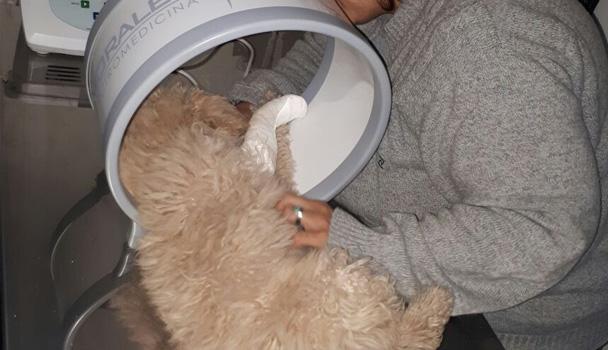 Tratamiento regenerativo en perros, explicación del médico