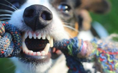 La enfermedad periodontal de nuestras mascotas