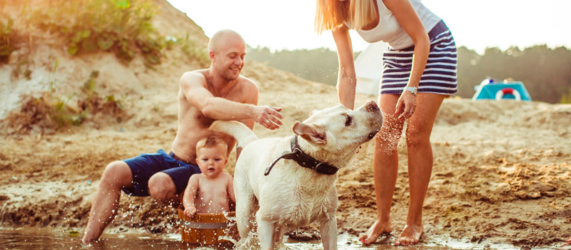 ¡Vacaciones con tus mascotas!