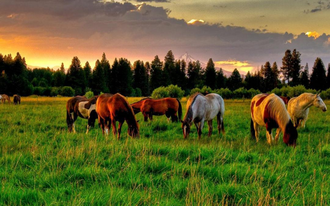 ¿Cómo cuidar a tu caballo para que descanse bien?
