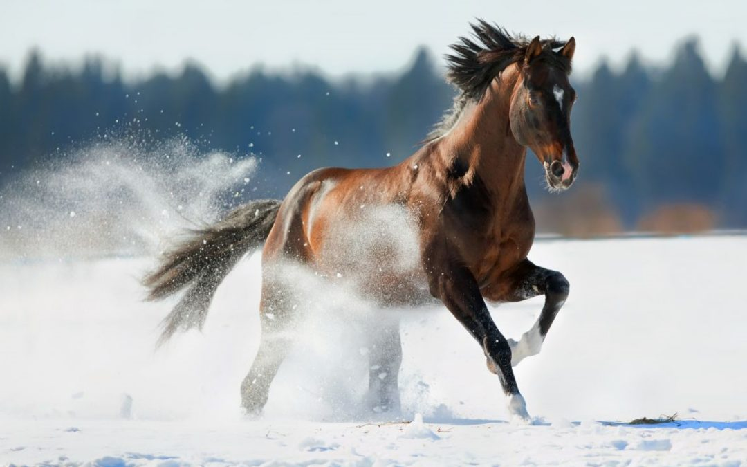 Recomendaciones para cuidar a tu caballo en invierno