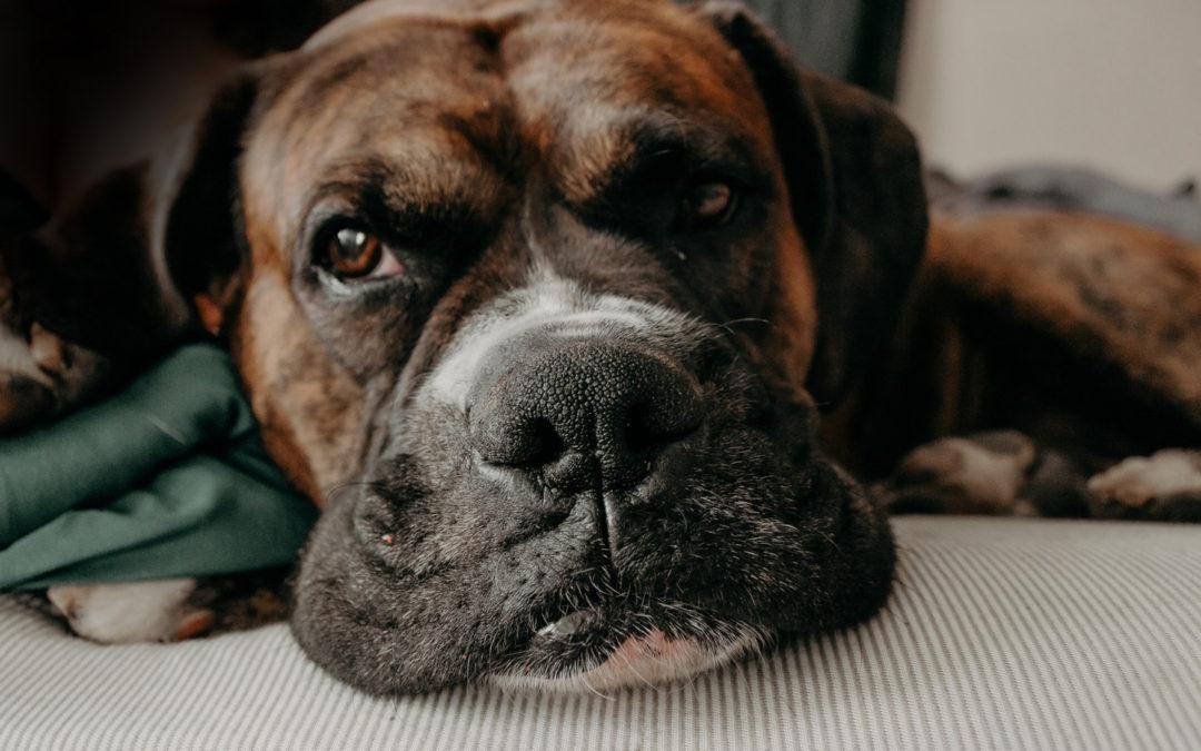 8 consejos para cuidar a las mascotas de la tercera edad
