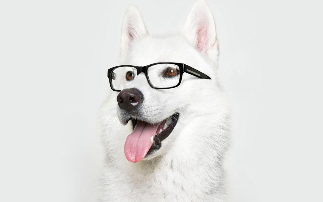 Tercera edad en nuestros perros