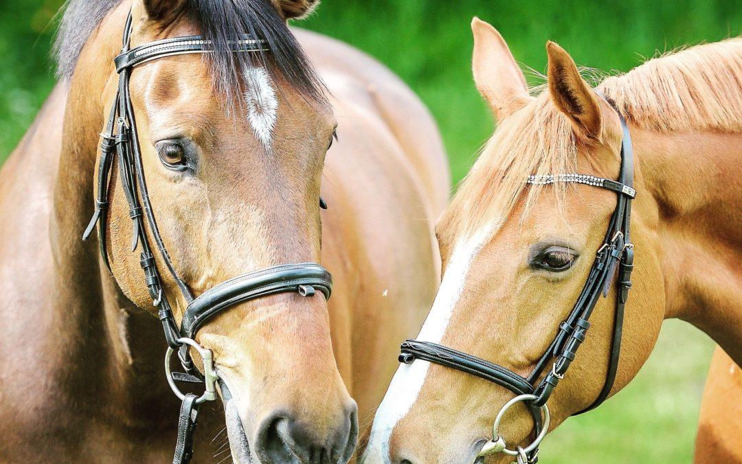 ¿Cuál es el carácter ideal para caballos de deporte?