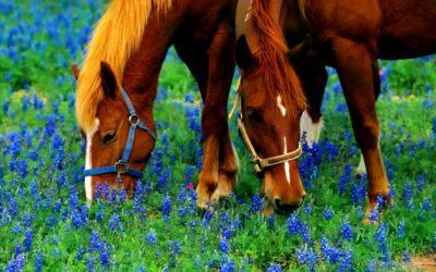 ¿Cómo cuidar a tu caballo en primavera?