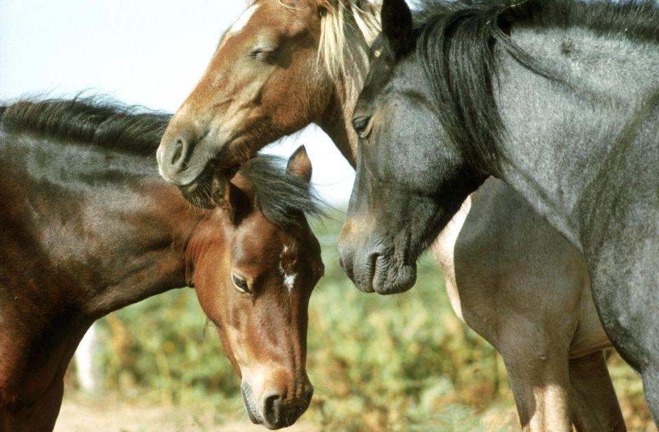 #Curiosidades ¿Cómo duermen los caballos?
