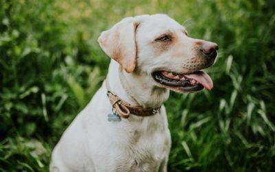 La alergia en las mascotas