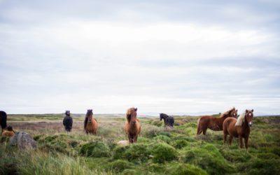 La personalidad de un caballo
