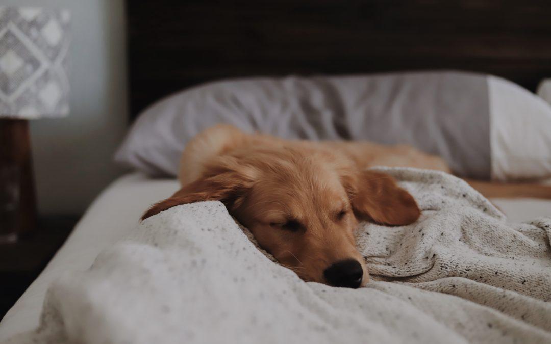 ¿Está bien o está mal compartir la cama con nuestro perro?