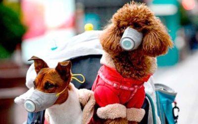 Coronavirus en los animales: ¿Hay posibilidad de contagio?
