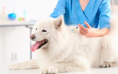 Porque se enferman ya vacunados los perros y gatos