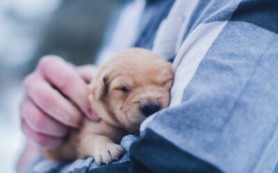 Un nuevo cachorro en casa