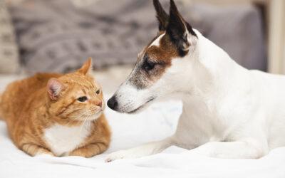 Como llegan los parásitos a nuestras mascotas