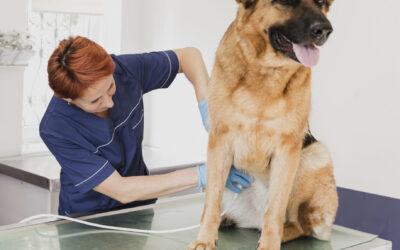 Terapia Fisica y Rehabilitación Veterinaria