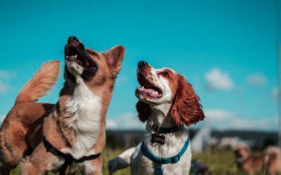 Mitos y costumbres sobre nuestras mascotas
