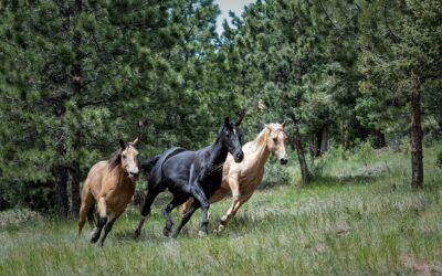 ¿Cuanta distancia puede recorrer un caballo?