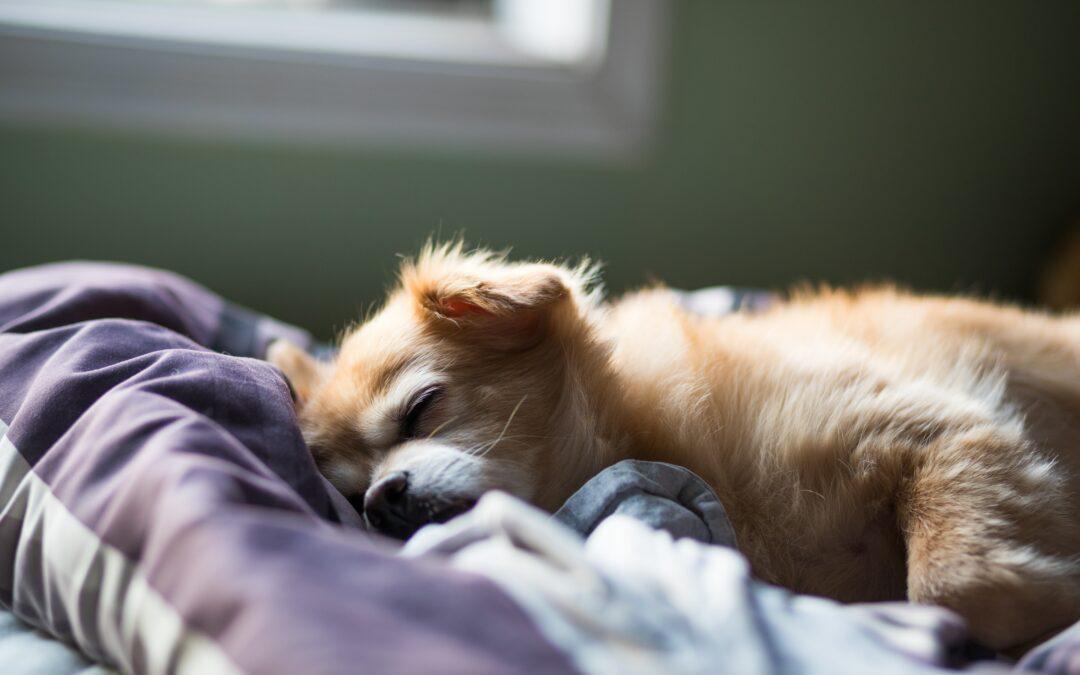 Mi perro hace ruidos extraños cuando duerme. ¿Está soñando?