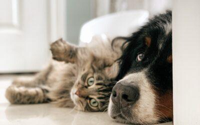 Los perros y gatos no son iguales