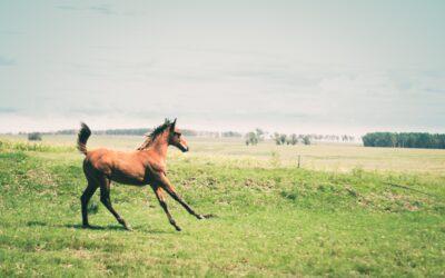 ¿Cuántos años vive un caballo?
