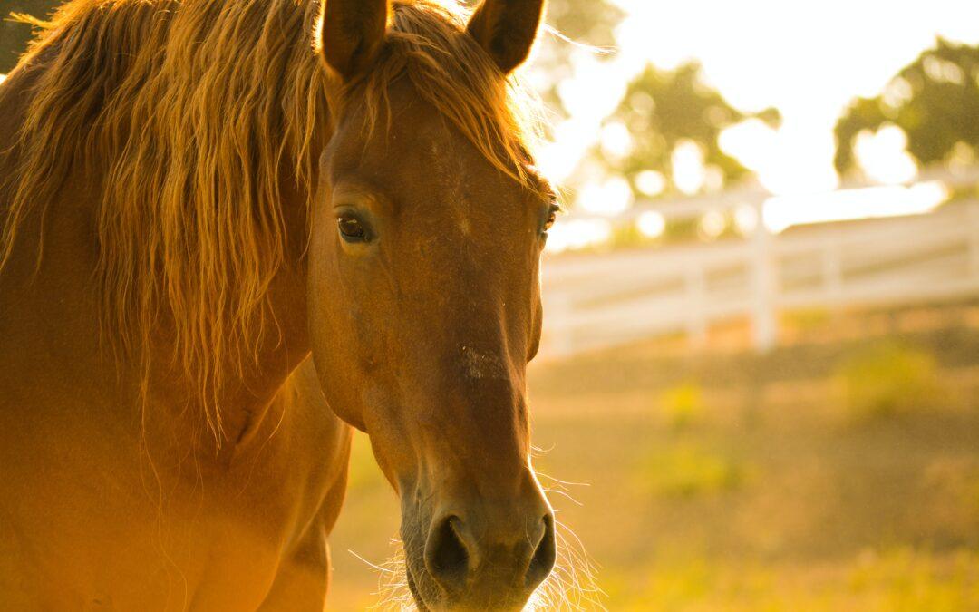 Consejos para mejorar el pelaje de su caballo