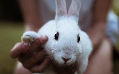 Los primeros cuidados de tu conejo